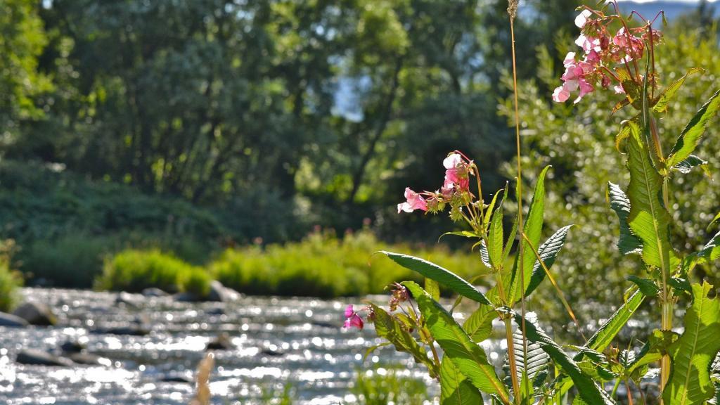Garten und Sonnenterrasse